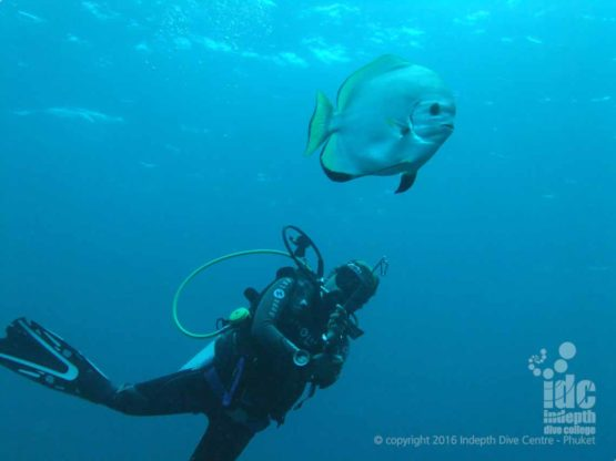 Bat fish love scuba divers! Don't be surprised if they follow you on your dive