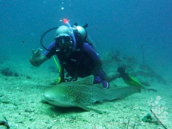 Chris Owen shark diving while teaching Shark Conservation Specialty Instructor Course