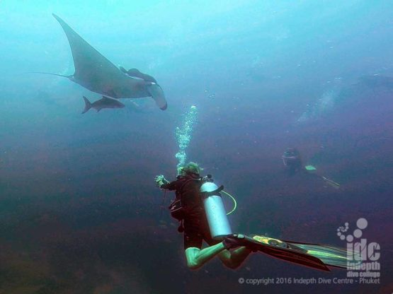Drift diving with Manta Rays is an awesome experience, if you are lucky it could be you