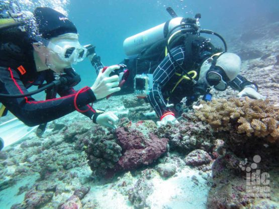 Phuket PADI Instructor demonstrates Digital Underwater Photography