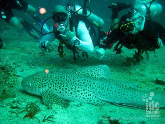 AWARE Shark Conservation student divers Phuket