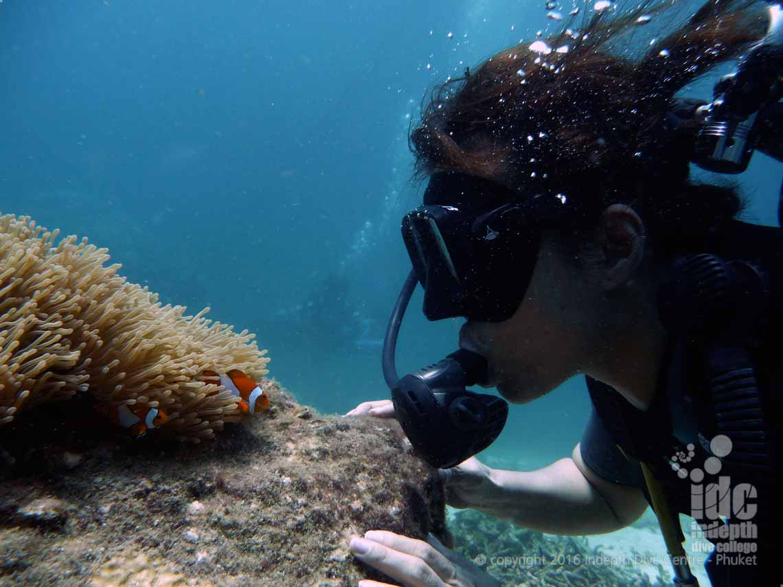 The PADI Underwater Naturalist Course is a great course for beginners to learn about  what they are seeing underwater