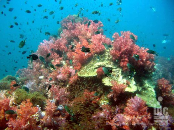 Dive Phuket and Shark Point with Indepth Dive Phuket