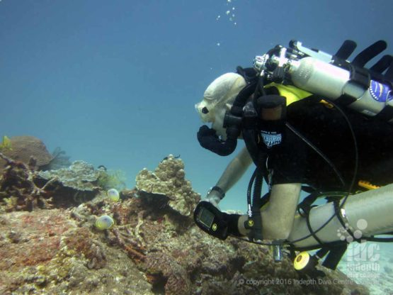 Poseidon Rebreather Diver taking his PADI Underwater Naturalist Specialty Diver Course with Chris on Phuket Thailand