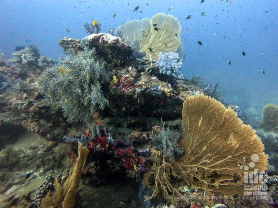 The northern side of Tachai Pinnacle features countless bommies covered in pristine soft corals