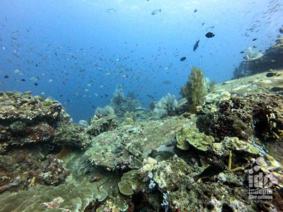 Pristine coral reef at Tachai Pinnacle, one of the top Thailand dive sites