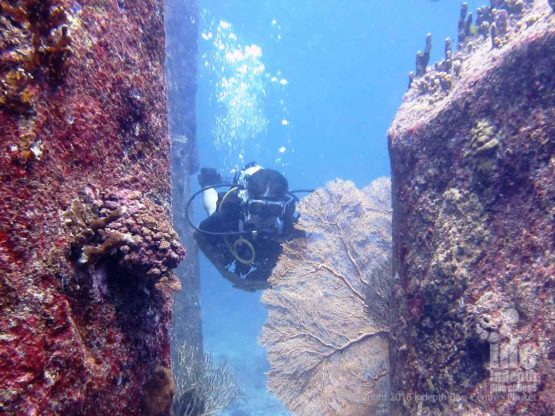One Adventure dive you can do on Phuket is the UW Naturalist Adventure Dive