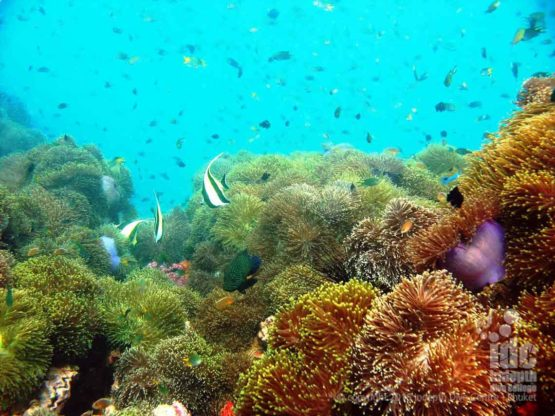 Andaman sea and anemones make awesome Dives