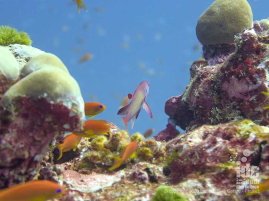 Vibrant reef life at Similans - Anita's Reef Dive Site