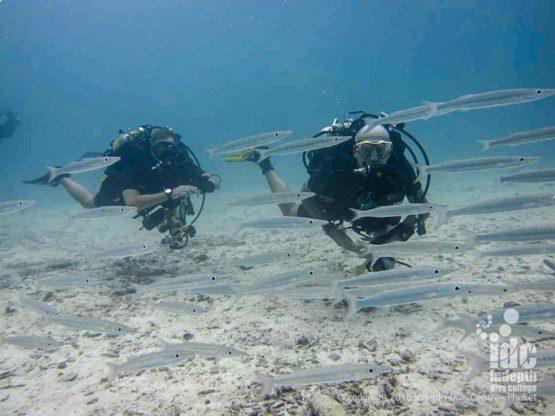 Rebreather Diving Similan Islands