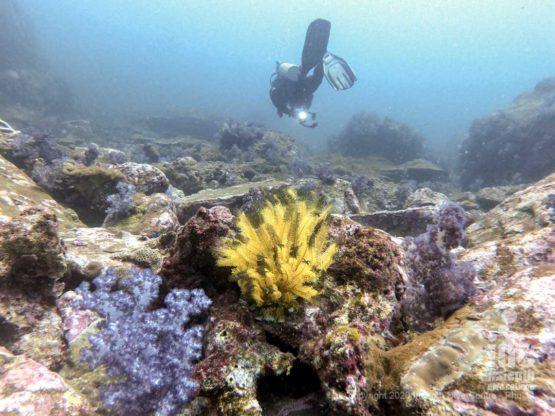 Healthy coral reef at Black Rock Diving Burma