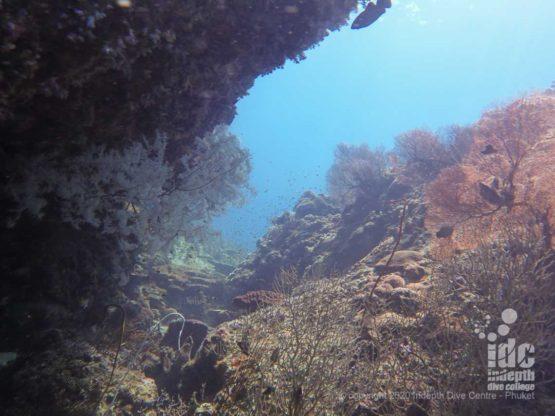 Diving Black Rock Myanmar