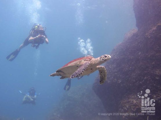 Swimming with sea turtle at Boulder City - Similan Islands Dive Site