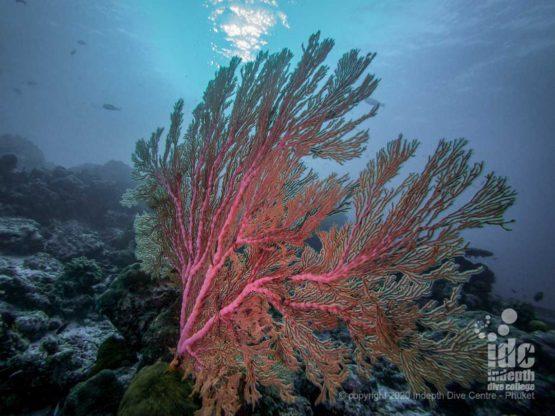 Very healthy reef at Breakfast Bend AKA Three Trees