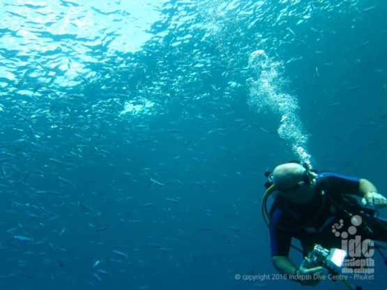 Go Scuba Diving with Indepth Dive Centre to Bungalow Bay