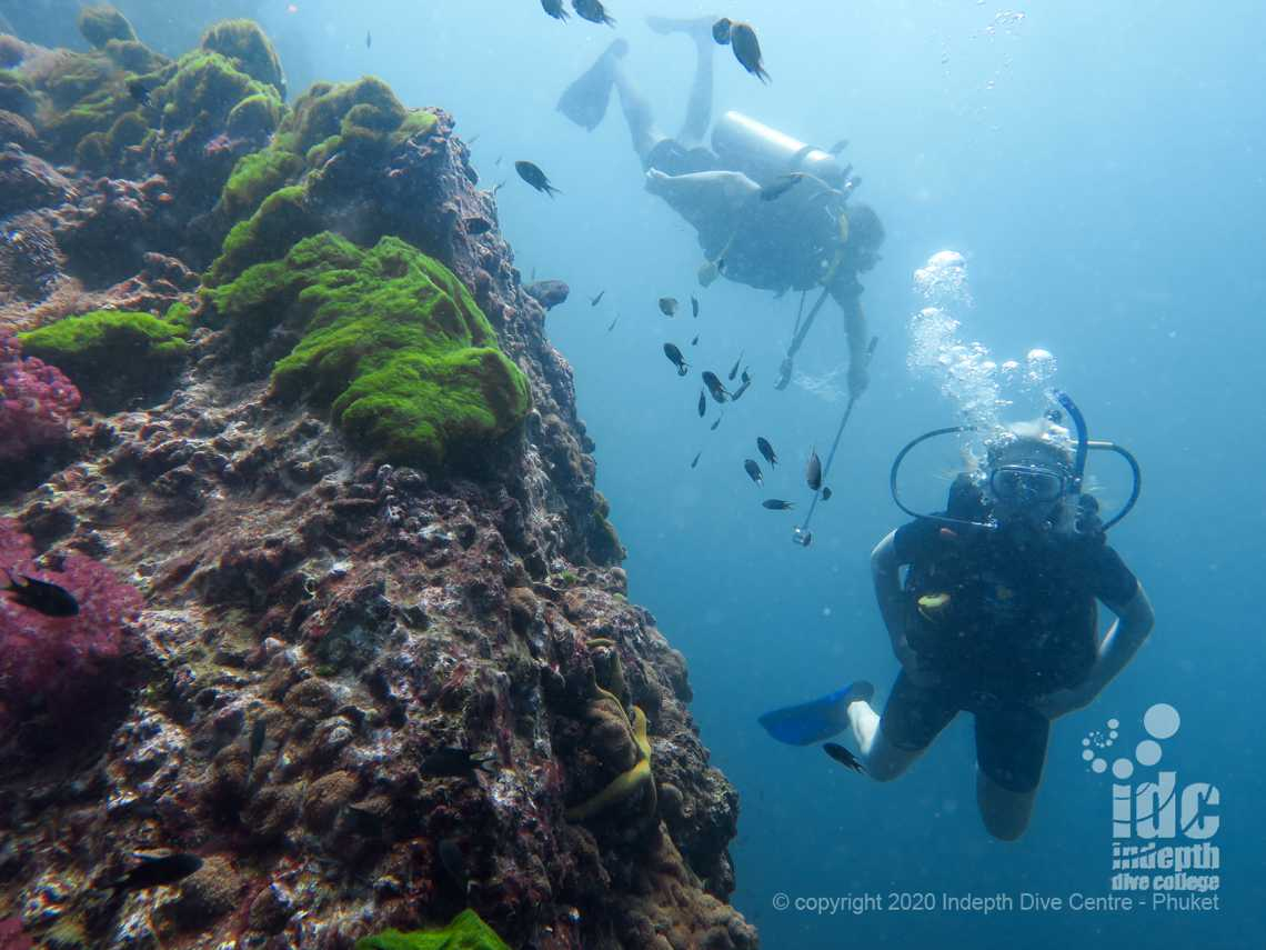 Diving with a Manta Ray at Chinese Wall on a Similan Liveaboard with Indepth Dive Centre Phuket