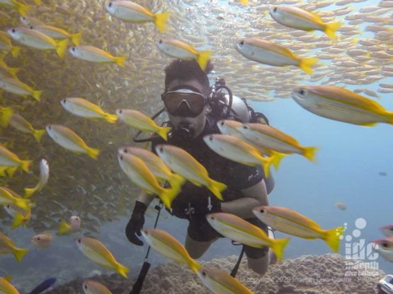 Diving through school of yellow snappers at Chinese Wall