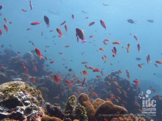Healty reef Similan Islands