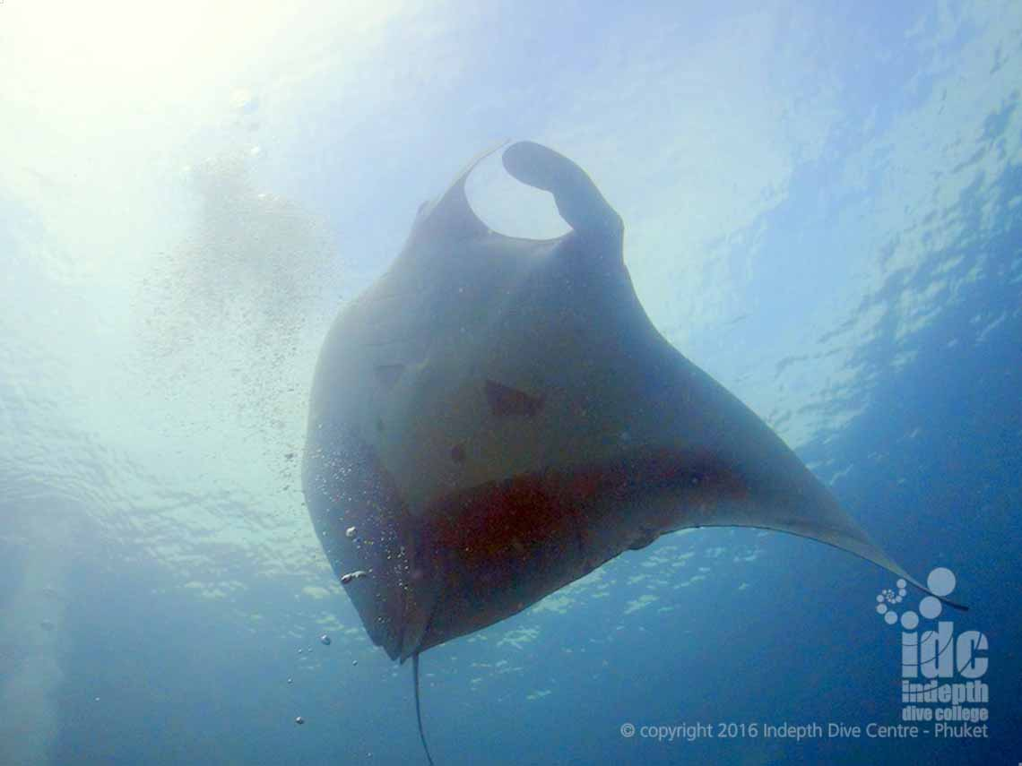 Christmas Point is always good for a Manta Dive!