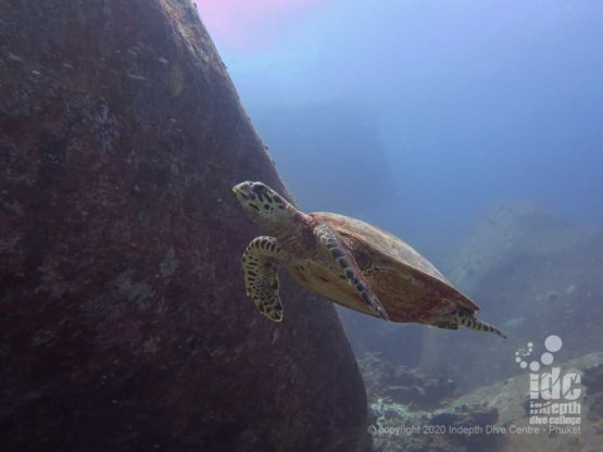 Turtles are a frequent sight when diving Deep Six in Similan Islands
