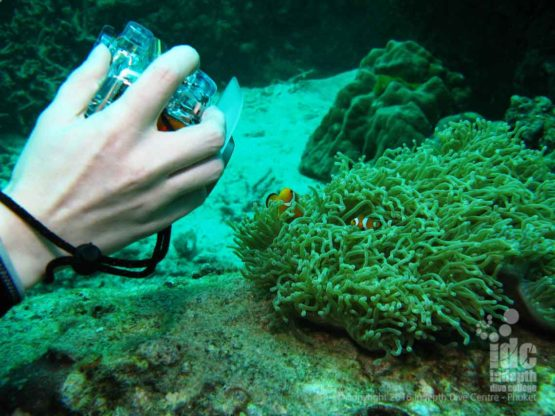 Digital Underwater Photography Advanced Open Water Dive with Nemo