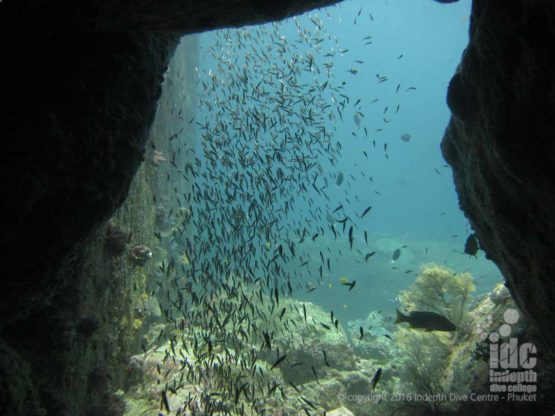 Dive The Similans and Boulder City with Indepth Dive Centre Phuket