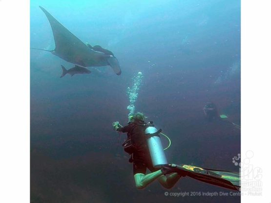 Living The Dream as a PADI Divemaster in the Similans guiding certified divers