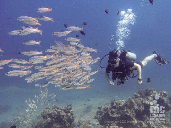Diver and fish school at Bida Nai