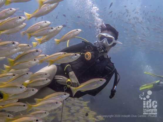 Divers are mesmerized by swimming across large schools of yellow snappers in Koh Bida Nok Thailand Diving