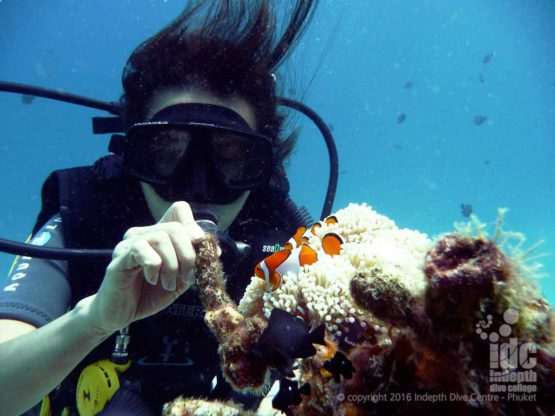 A scuba diver with a clown fish at Racha Noi on a 3 dive day