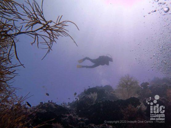 Deep wall at Hin Muang Dive Site Thailand