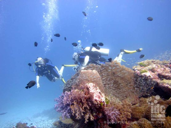 Scuba Diving with Indepth in the Andaman Sea