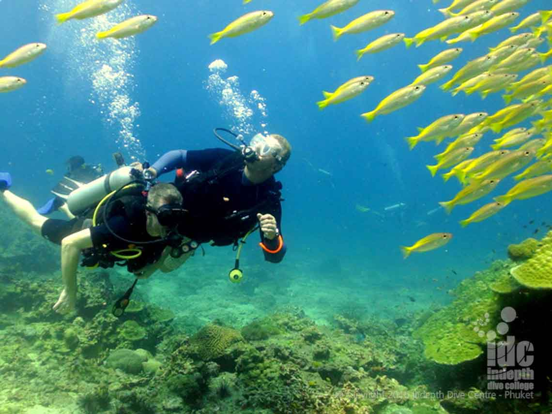 Diving at Hin Bida with yellow snappers and Indepth Dive Centre