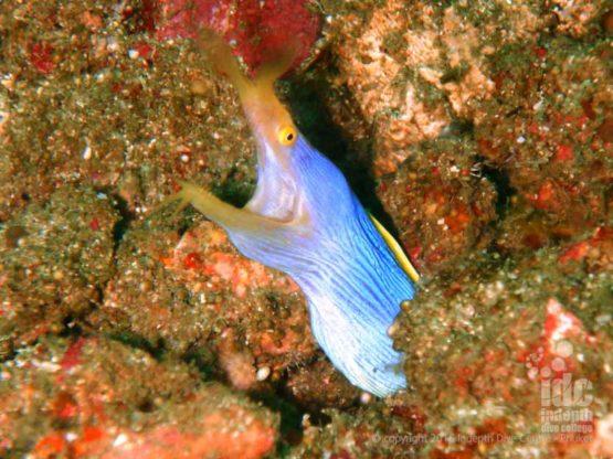 Three Islets has lots of Moray Eels and marine life