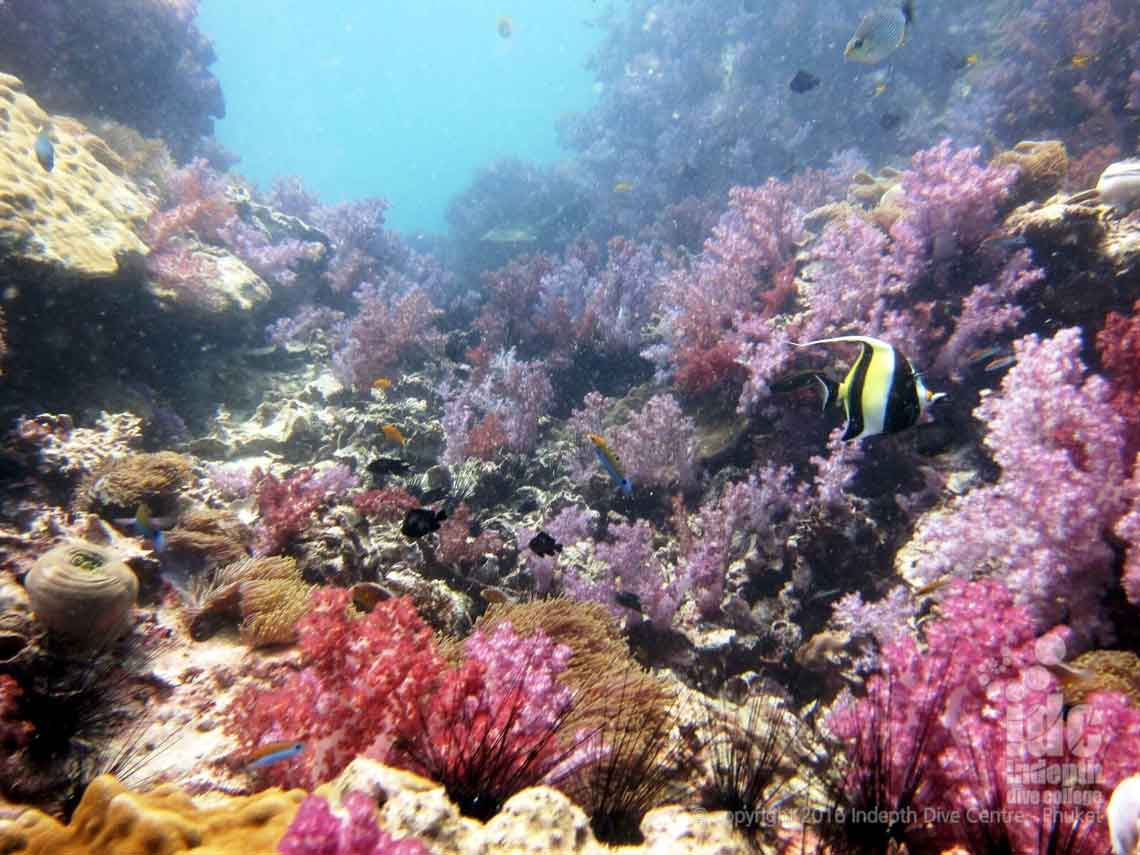 Fan Forest Pinnacle is a great Burma Liveaboard Dive Site