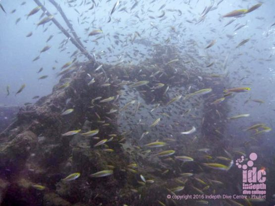 Large schools of fish are always surrounding Boonsung Wreck