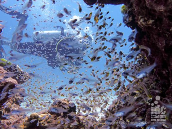 Honeymoon Bay Dive Site features many bommies covered in glassfish