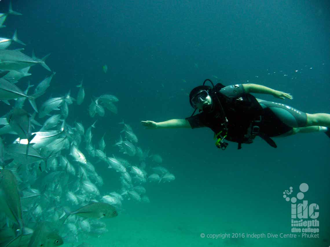 Padi buoyancy course indepth dive centre phuket idc phuket for Dive centres