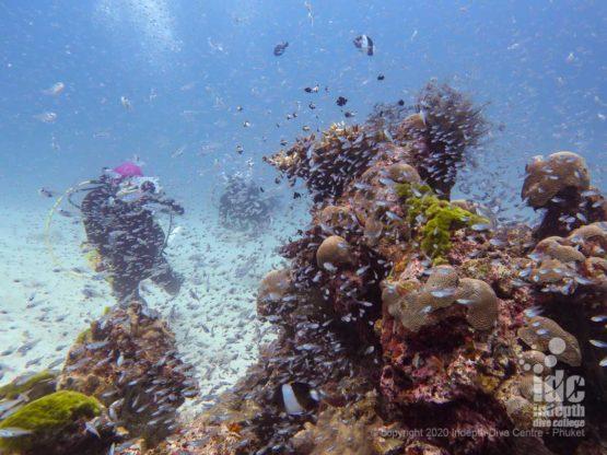 Healthy coral bommies at Banana Bay Racha Noi