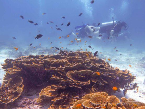 Healthy corals at Marita's Rock dive site - Phuket Dive Sites