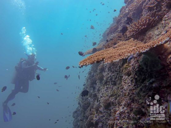 Sheer wall with hard corals at High Rock - Diving Burma Liveaboards
