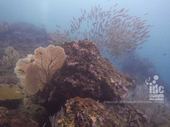 Healthy reef at High Rock Myanmar Diving
