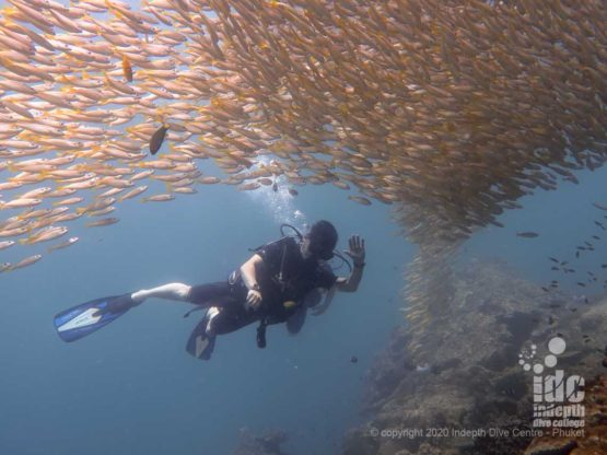 Happy divers swimming through thousands of yellow snappers at High Rock Myanmar Diving