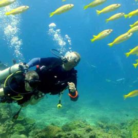 Diving with Yellow Snappers at Hin Bida Phi Phi Islands