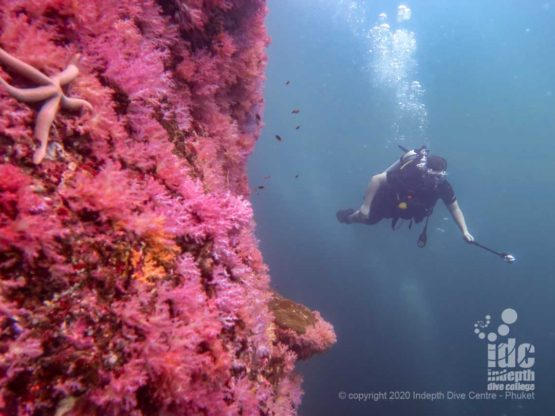The abundance of red soft coral is what gives the name to Hin Daeng dive site