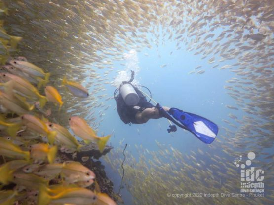 Diving through a massive school of yellow snappers is an amazing experience while Phuket diving