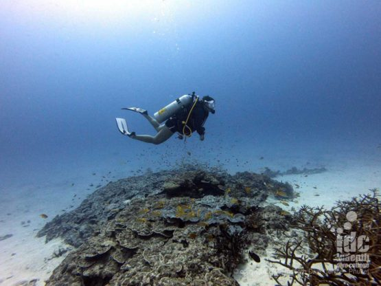 Crystal clear water is a frequent feature of Honeymoon Bay Diving
