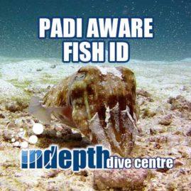 PADI Fish ID Course – Indepth Dive Centre Phuket