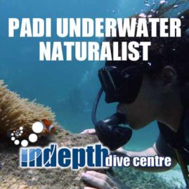 Get your PADI Underwater Naturalist Specialty Diver Course with Indepth Dive on Phuket
