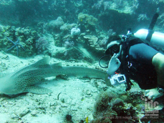 Indepth Shark Specialty Course on Phuket